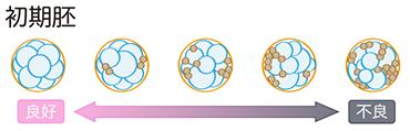 培養室から初期胚