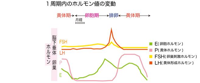 卵巣機能低下1周期内のホルモン値の変動